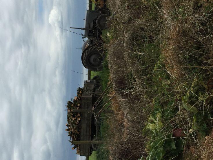 1947 TVO Ferguson Tractor